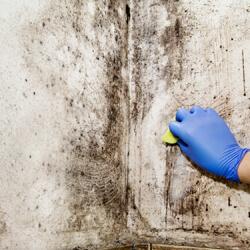 Scrubbing Mold